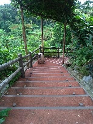 やんばる亜熱帯の森